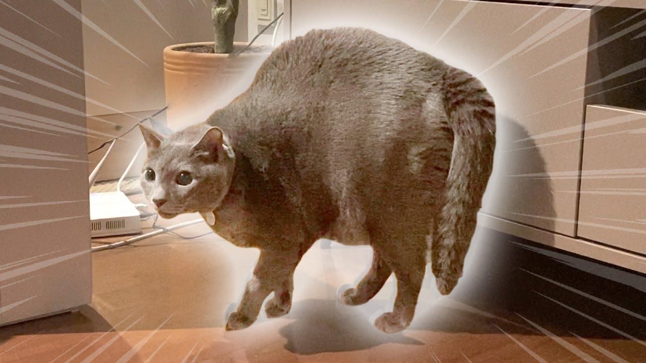 고양이가 완-전 깜짝 놀랐을 때 리얼 반응