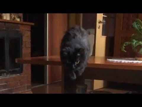 amazing-cat-jump-slow-motion