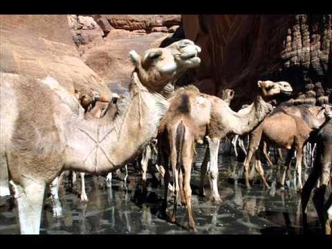 Guelta d'Archei | Amazing lake in Sahara Desert