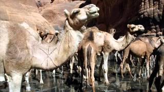 Guelta d Archei   Amazing lake in Sahara Desert