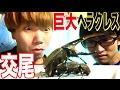 【衝撃映像】ヘラクレスカブトムシの交尾をしたところ初めて見た!