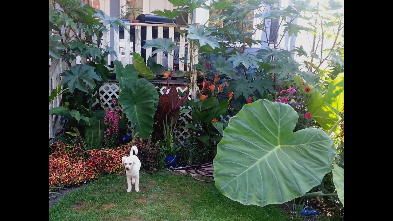 Tropical Garden in Chicago - YouTube