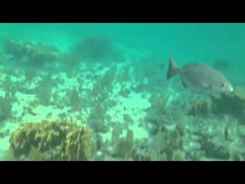 Beach snorkeling Grand Bahamas Island
