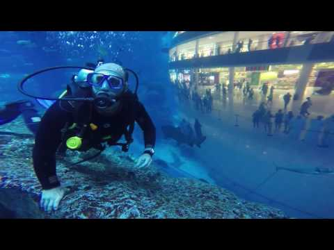 Diving with Sharks in Dubai Aquarium