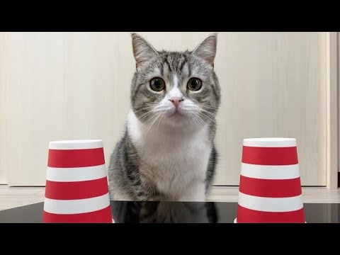 もち 猫 まる 動画