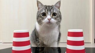 猫とシャッフルゲームしたら賢すぎてこうなったw