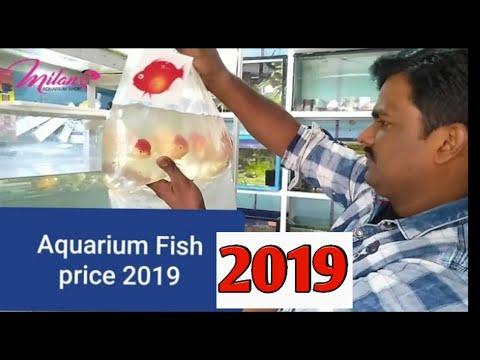 Freshwater Aquarium fish varieties price with Name's ! Aquarium fish price with  Name's in india