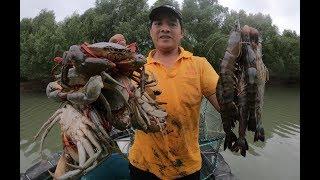 红树林里的大螃蟹没人抓,刀仔进去放下几个大蟹笼,今天发财了