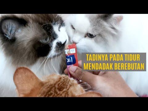 Snack Kucing Vitakraft