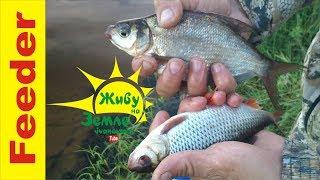 Хитрости при плохом клеве рыбы. (Фидер с 0)