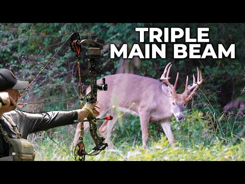 HUGE TRIPLE BEAM Buck!! Bowhunting Ohio's Early Season. Big Buck Down