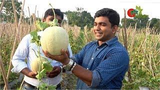 Rock melon (রক মেলন)- সফল বানিজ্যিক চাষ বাংলাদেশে