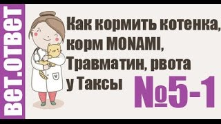 Как кормить котенка, корм MON AMI, Травматин, рвота у Таксы. Ветеринар онлайн. 5-1