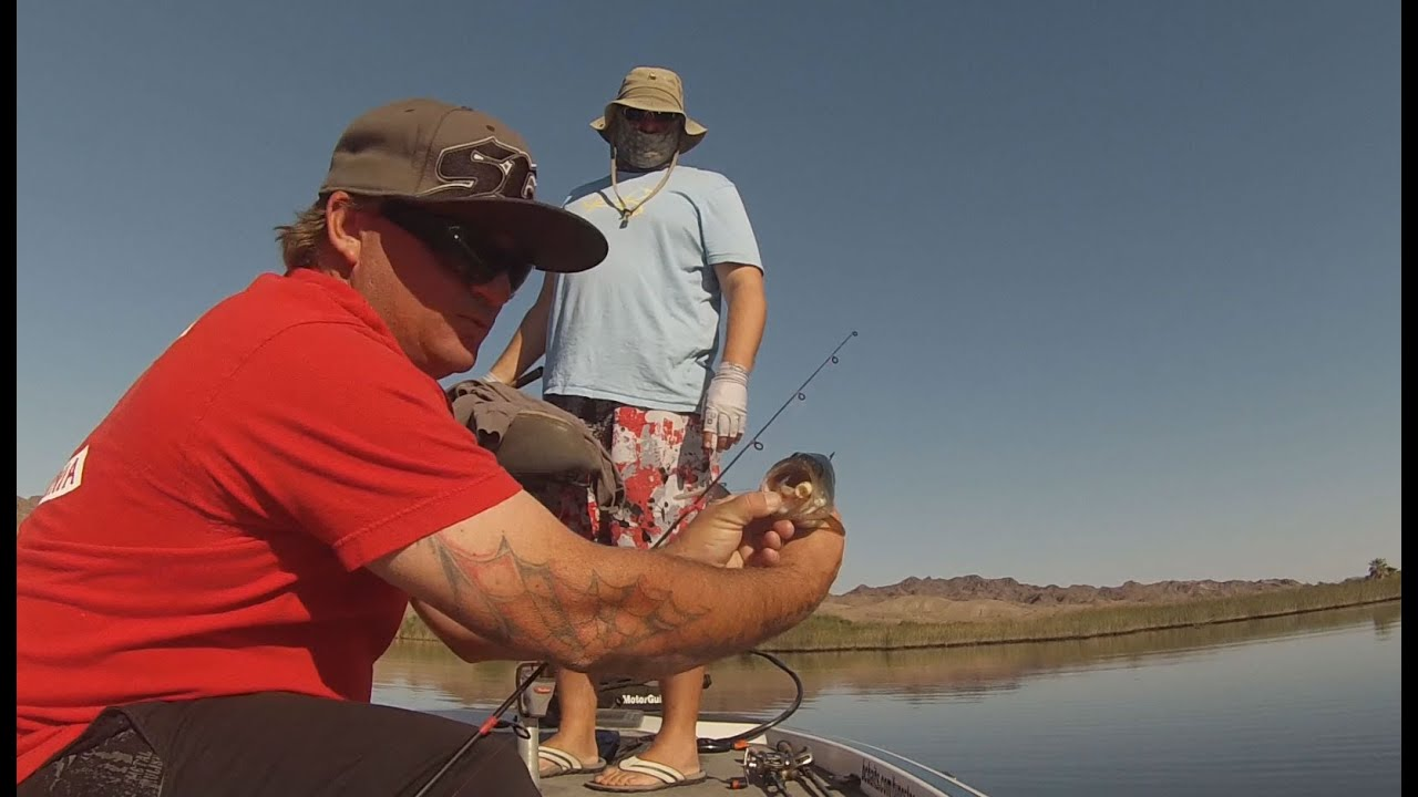 Lower colorado topwater bass fishing with bcbaits youtube for Bass fishing in colorado