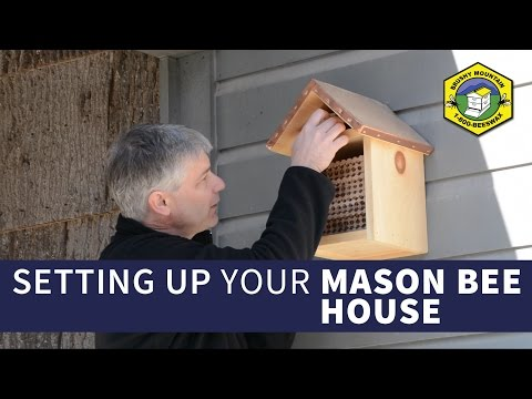 Setting Up Your Mason Bee House