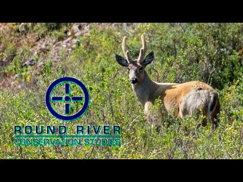 Tracking the Huemul Deer - Round River Conservation Studies