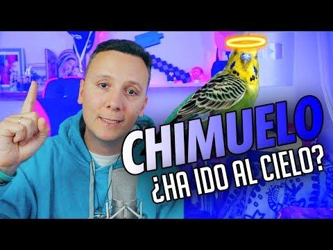 CHIMUELO, EL FUNERAL - ANÁLISIS DE UN SACERDOTE (SMDANI) | ALECMOLON REWIND 2019