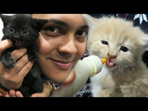 FEEDING KITTENS FOR THE FIRST TIME !!! (WARNING: FUNNY & CUTE)