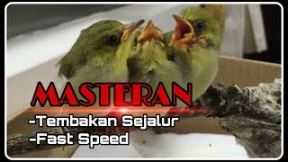 Gambar cover Masteran Pleci Tembakan Sejalur (NEW)