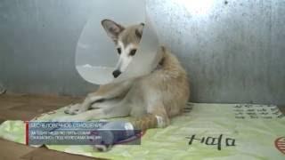 В приюте для бездомных животных проходят лечение пять собак, пострадавших от действий людей