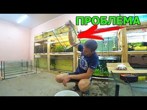 """""""ПРОСТОЕ"""" разведение рыбок"""