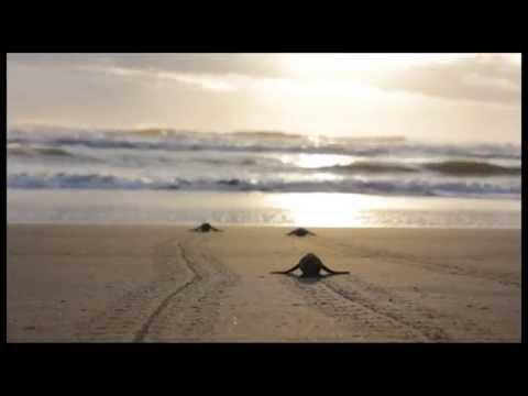 Saving the Leatherback Turtles in Costa Rica - Endangered Wildlife Trust