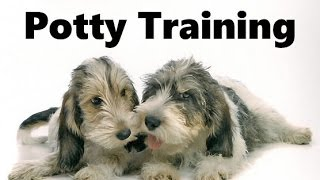 How To Potty Train A Petit Basset Griffon Vendeen Puppy - Grand Basset Griffon Vendeen Puppies