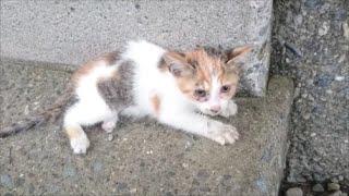子猫を保護して1年-Rescue a kitten 1 year.【Uzu&Nene channel】ウズネネチャンネル