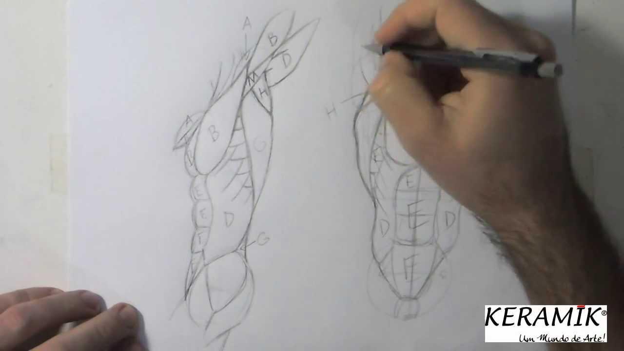 Como desenhar: Praticando Anatomia - Tronco Axilas - YouTube