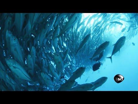 Get Swept Up by the Tuna Tornado