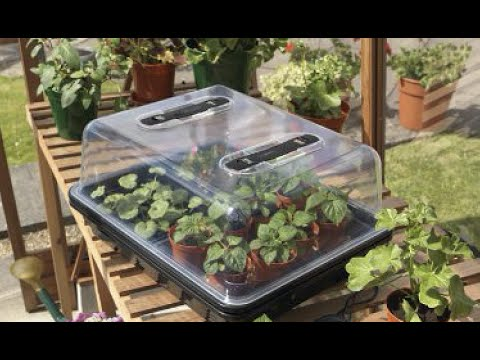 Propagators For Plants, Fruits And Vegetables.