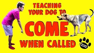 How To Teach Your Dog To Come When Called
