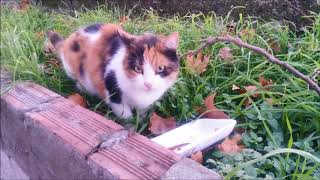 three cats eat food and they very happy thumbnail