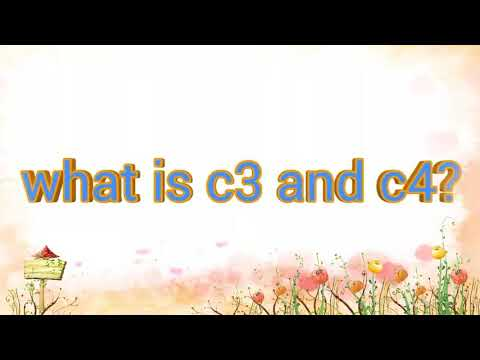 What is c3,c4.