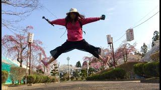 日本一周女ひとり旅278日目。岩手県奥州市のお物見公園で桜と懐かしのラムネLive