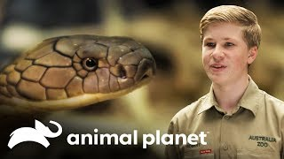 ¿Cómo se siente estar cerca de una cobra real? | Los Irwin | Animal Planet