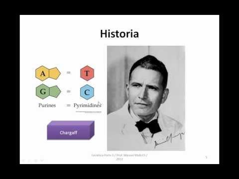 Ayudantía BioCel: El DNA 1/3 (Introducción)