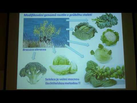 Tomáš Moravec - GMO plodiny - hrozba nebo šance? (Pátečníci 11.8.2017)
