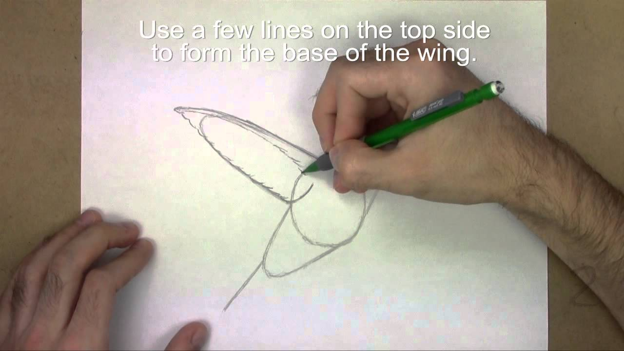 how to draw a hummingbird youtube