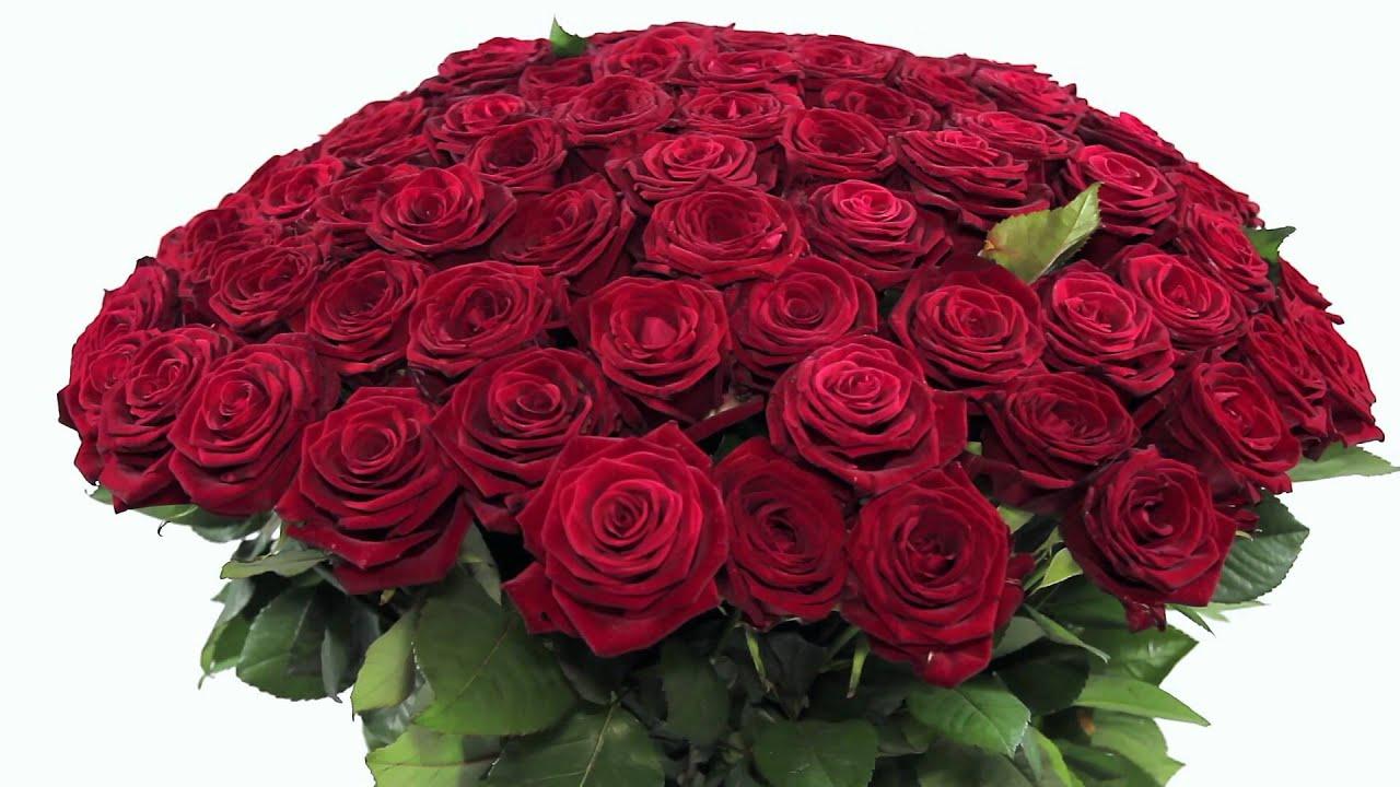 оснастка шикарный букет из алых роз фото роли