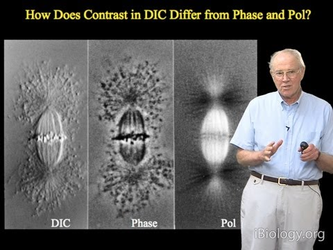 Microscopy: Differential Interference Contrast (DIC) Microscopy (Edward Salmon)