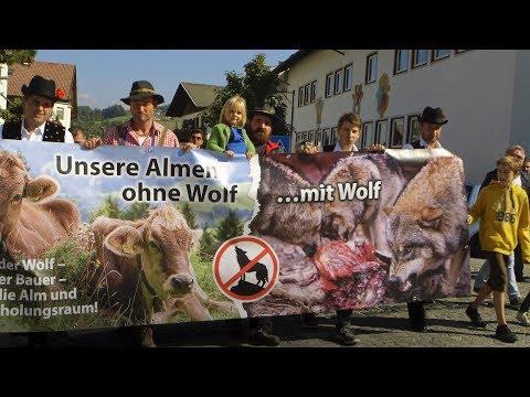 Der Wolf in Südtirol – Bilanz zum Almsommer 2018