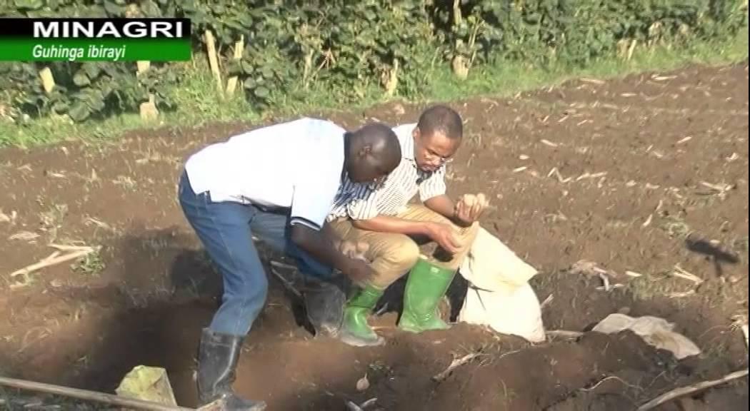 UBURYO BAHINGA IBIRAYI NO KUBIRINDA INDWARA Ubuhinzi mu Rwanda-Rwanda agriculture