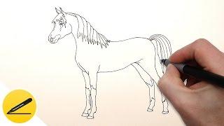видео лошади онлайн  Как красиво нарисовать лошадь