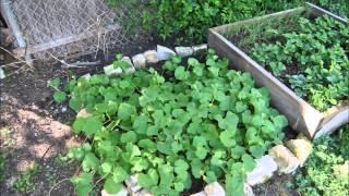2013 Garden And Woody Bed Update
