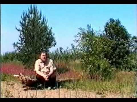 Чабрец (трава) – полезные свойства и применение чабреца