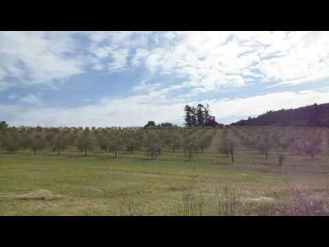 Growing Olives Commercially in Canada