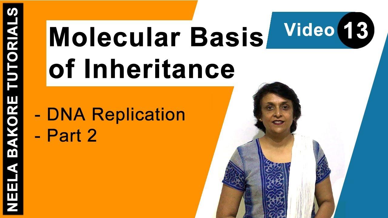 Molecular Basis of Inheritance - DNA Replication - Part 2 ...