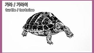 동물그리기- 거북/거북이. turtle / tortoi…