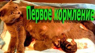 Маленькие котята первые раз кушают. Собака наблюдает Как кошка кормит котят. Новорожденные  слепые.